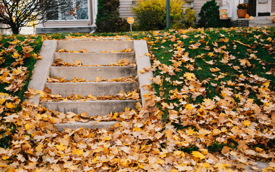 Fall Planting and Landscaping Tips for Minnesota