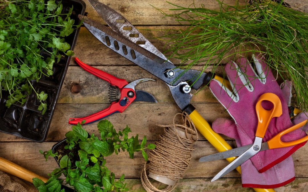 Choosing the Right Pruning Tool