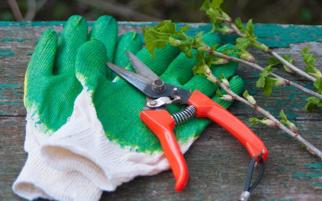 Cleaning and Sanitizing Your Pruning Tools