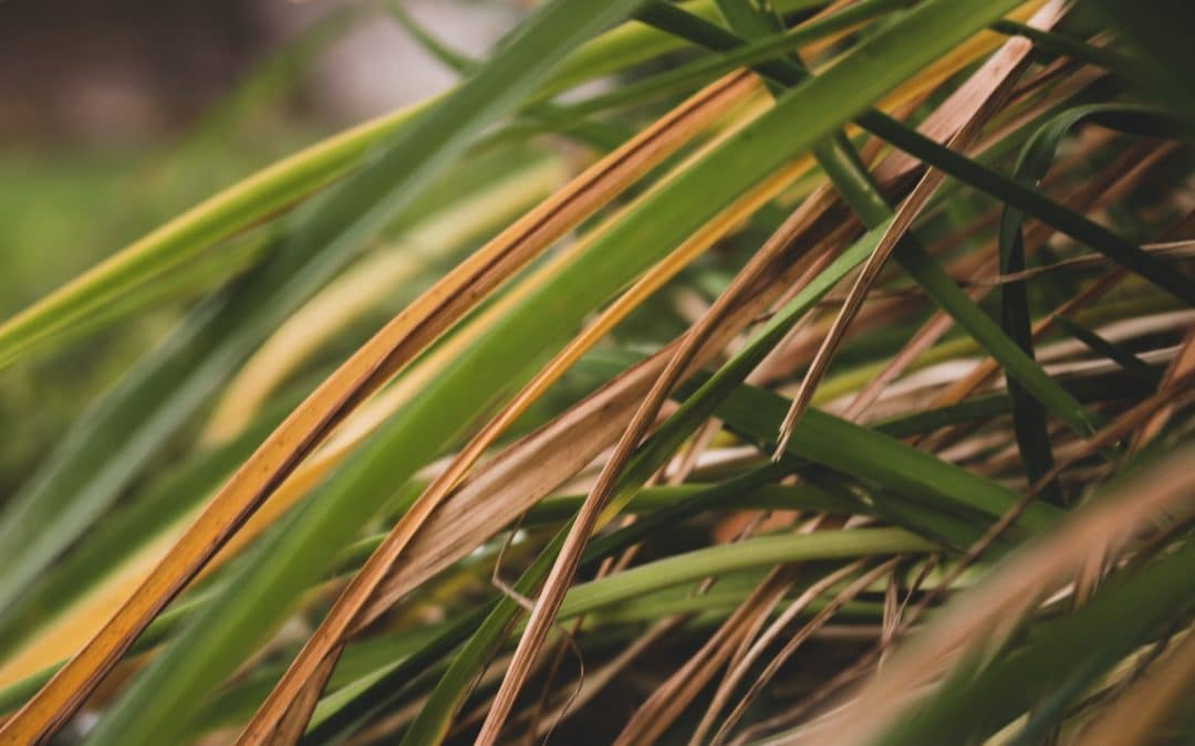 Common Lawn Diseases and How to Treat Them