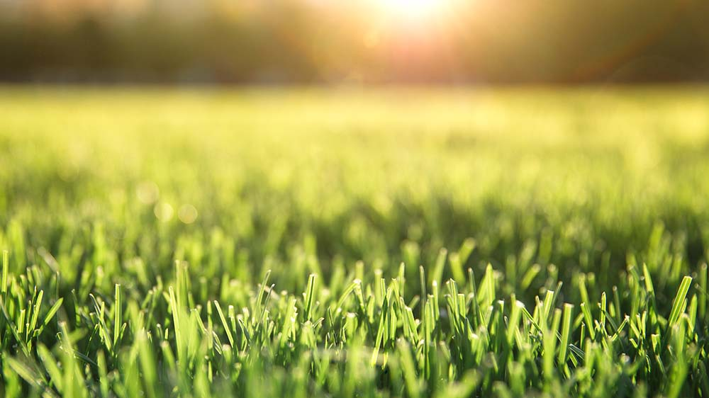Recovering Your Lawn from Heat Stress